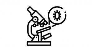 דף צביעה מיקרוסקופ